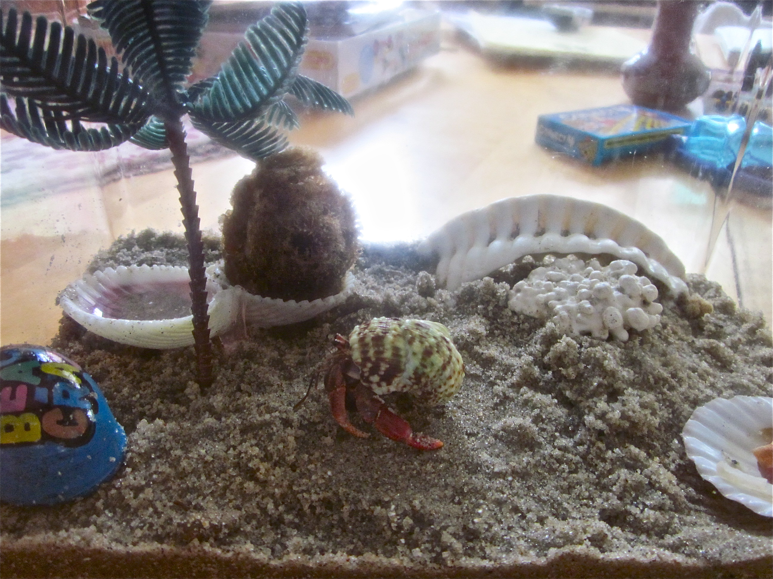 hermit crabs | Words for a Better World